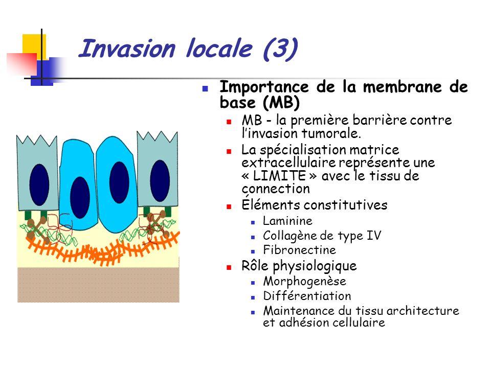 Invasion locale (3) Importance de la membrane de base (MB)