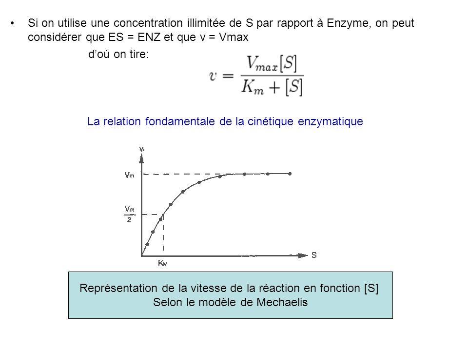 La relation fondamentale de la cinétique enzymatique