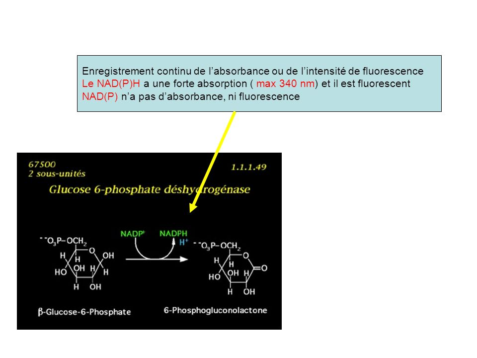 Enregistrement continu de l'absorbance ou de l'intensité de fluorescence