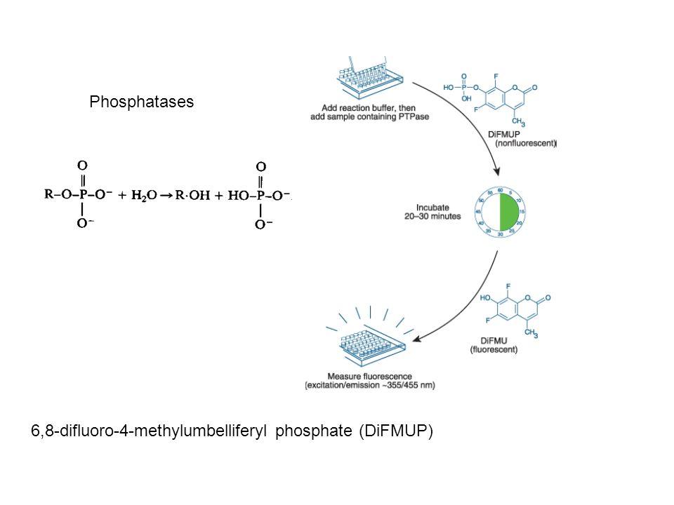 Phosphatases 6,8-difluoro-4-methylumbelliferyl phosphate (DiFMUP)