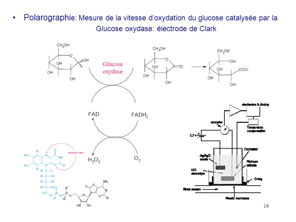 Glucose oxydase: électrode de Clark