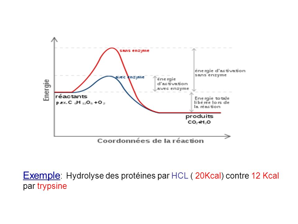 Exemple: Hydrolyse des protéines par HCL ( 20Kcal) contre 12 Kcal par trypsine