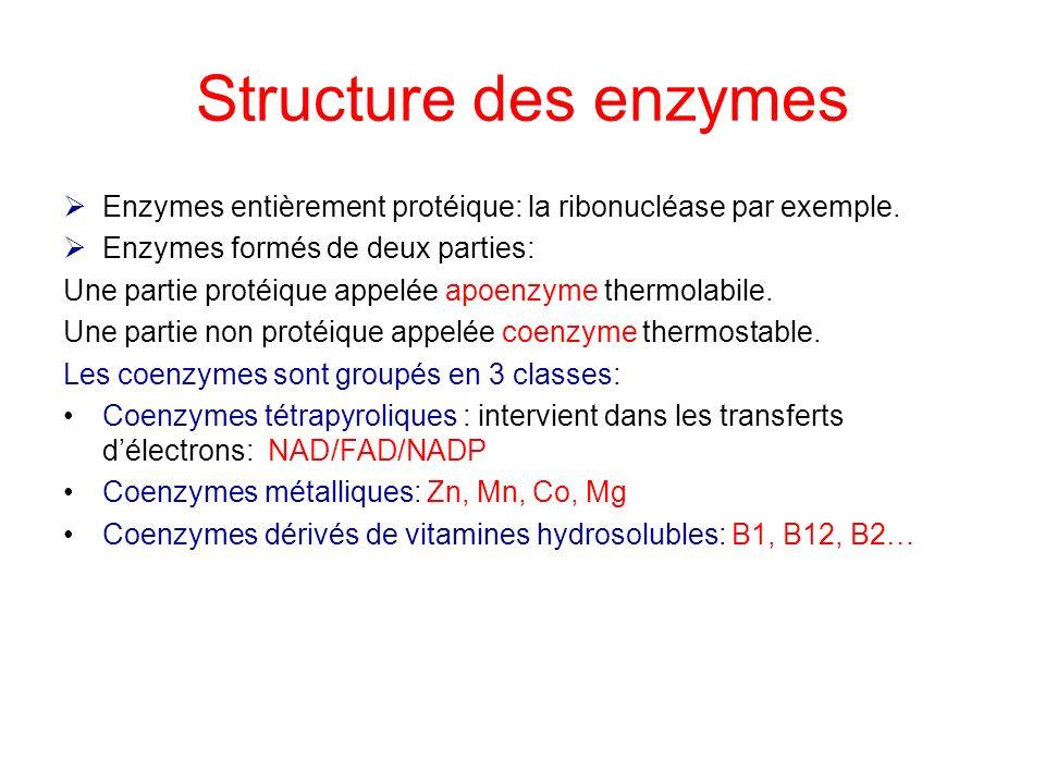 Structure des enzymes Enzymes entièrement protéique: la ribonucléase par exemple. Enzymes formés de deux parties: