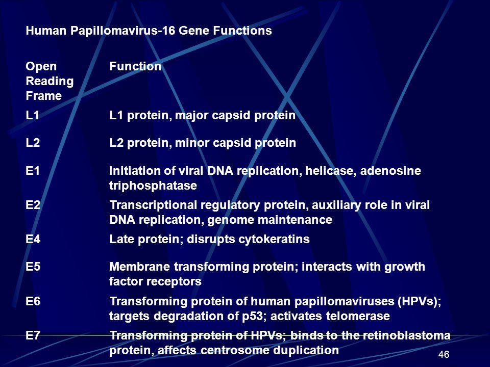 Human Papillomavirus-16 Gene Functions