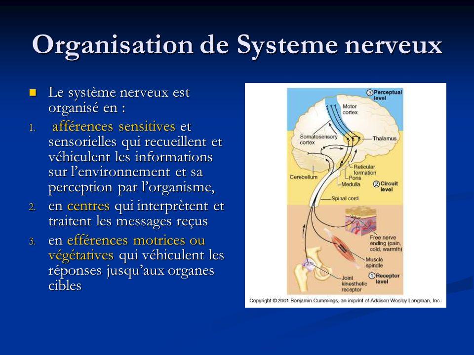 Organisation de Systeme nerveux
