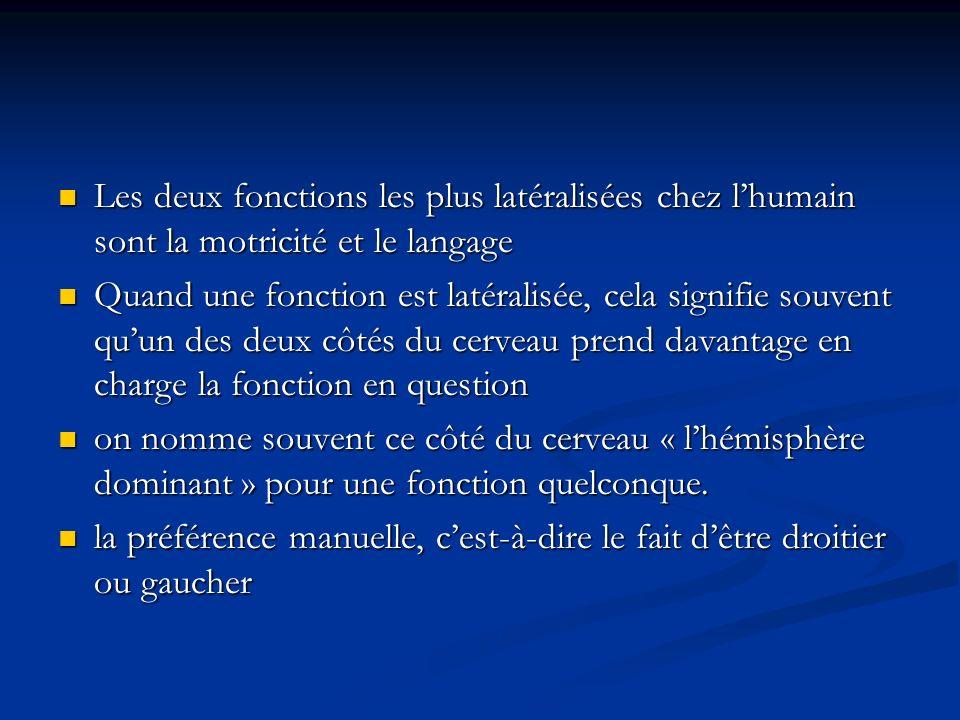 Les deux fonctions les plus latéralisées chez l'humain sont la motricité et le langage