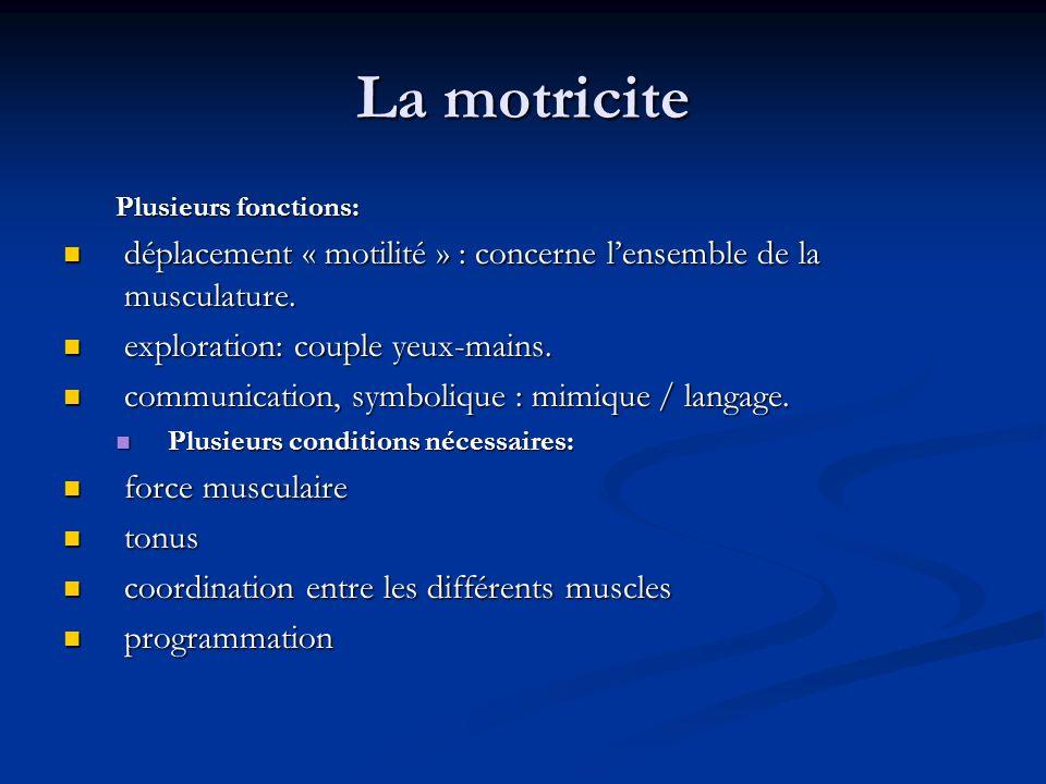 La motricite Plusieurs fonctions: déplacement « motilité » : concerne l'ensemble de la musculature.