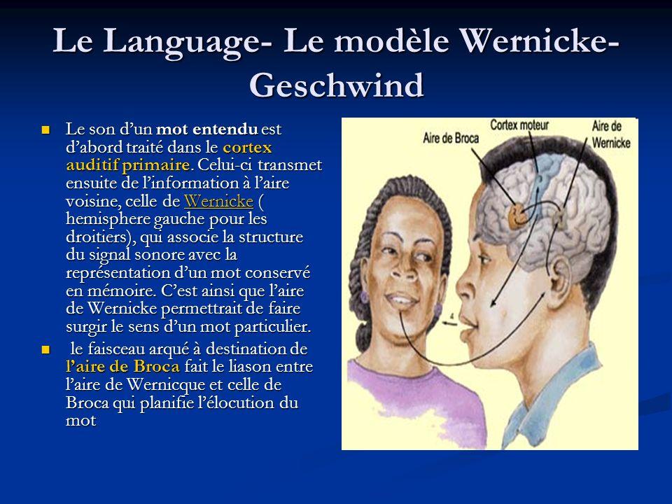 Le Language- Le modèle Wernicke-Geschwind