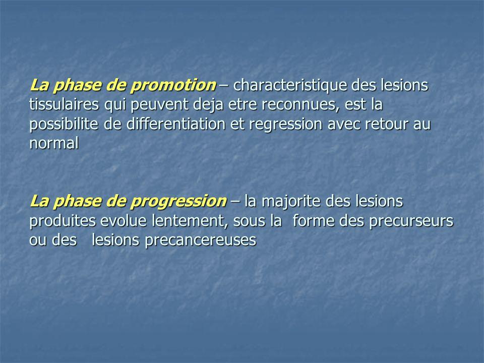 La phase de promotion – characteristique des lesions tissulaires qui peuvent deja etre reconnues, est la possibilite de differentiation et regression avec retour au normal La phase de progression – la majorite des lesions produites evolue lentement, sous la forme des precurseurs ou des lesions precancereuses