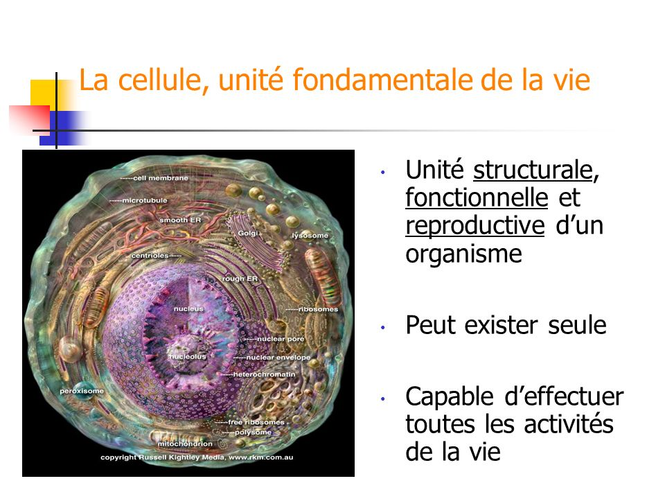 La cellule, unité fondamentale de la vie