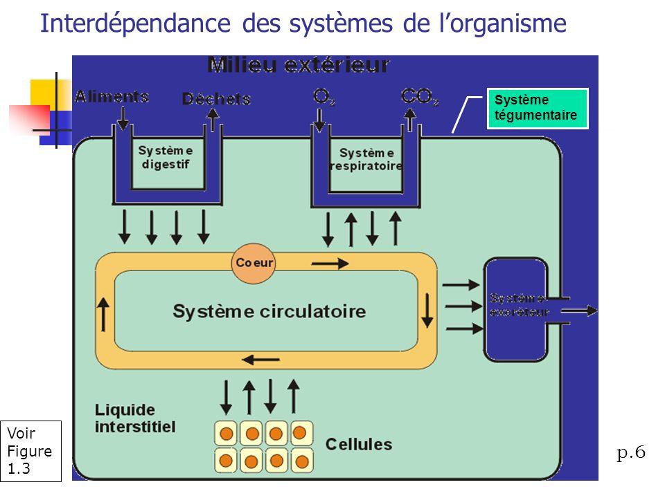 Interdépendance des systèmes de l'organisme