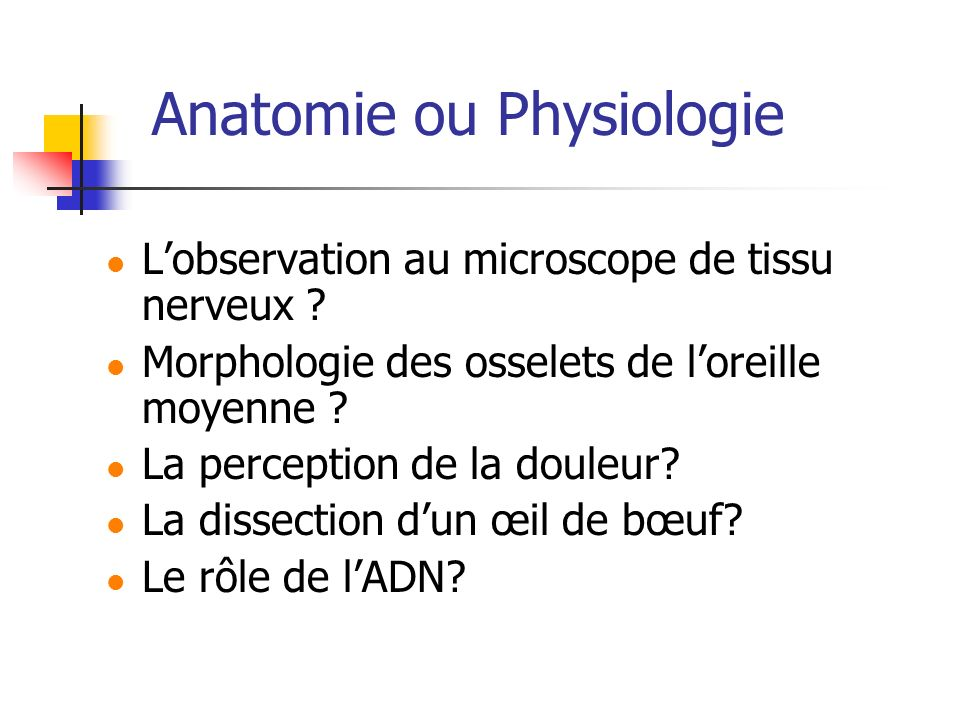 Anatomie ou Physiologie