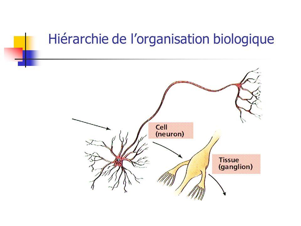 Hiérarchie de l'organisation biologique
