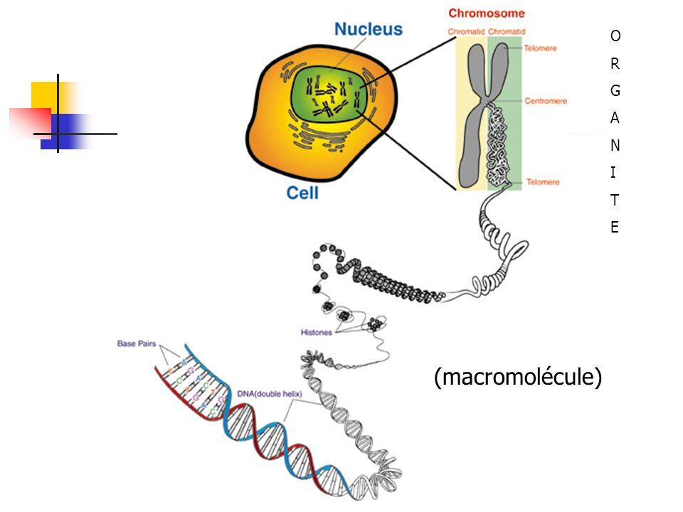 O R G A N I T E (macromolécule)