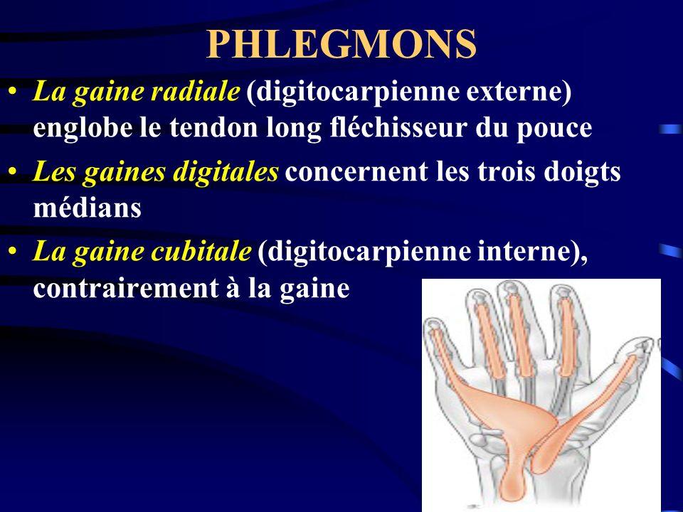 PHLEGMONSLa gaine radiale (digitocarpienne externe) englobe le tendon long fléchisseur du pouce.