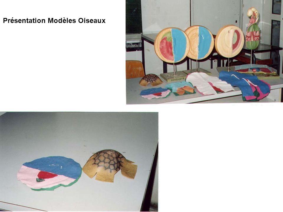 Présentation Modèles Oiseaux