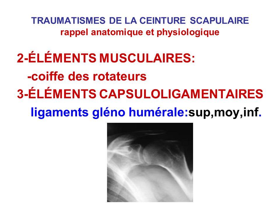 2-ÉLÉMENTS MUSCULAIRES: -coiffe des rotateurs
