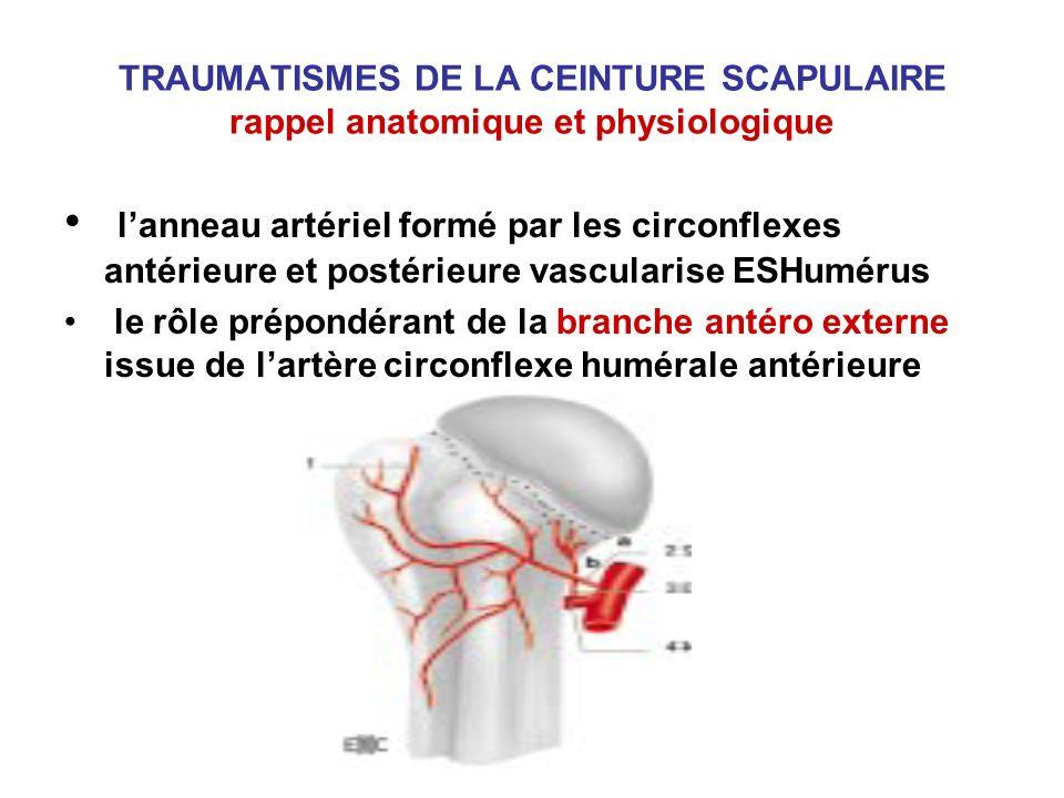 TRAUMATISMES DE LA CEINTURE SCAPULAIRE rappel anatomique et physiologique