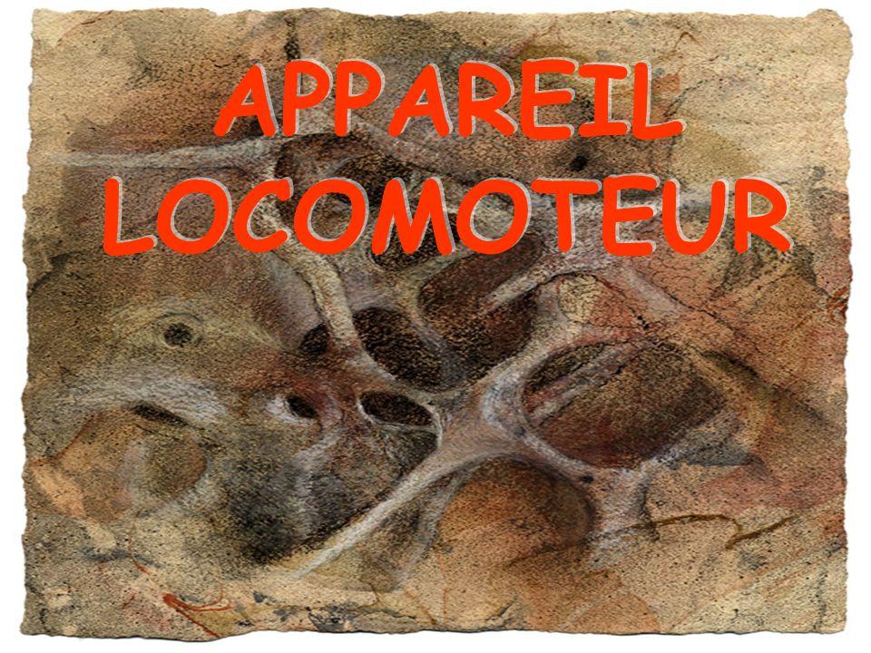 APPAREIL LOCOMOTEUR