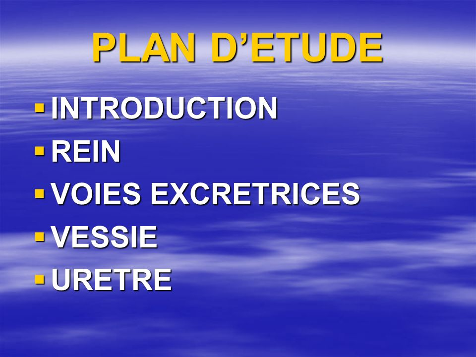 PLAN D'ETUDE INTRODUCTION REIN VOIES EXCRETRICES VESSIE URETRE