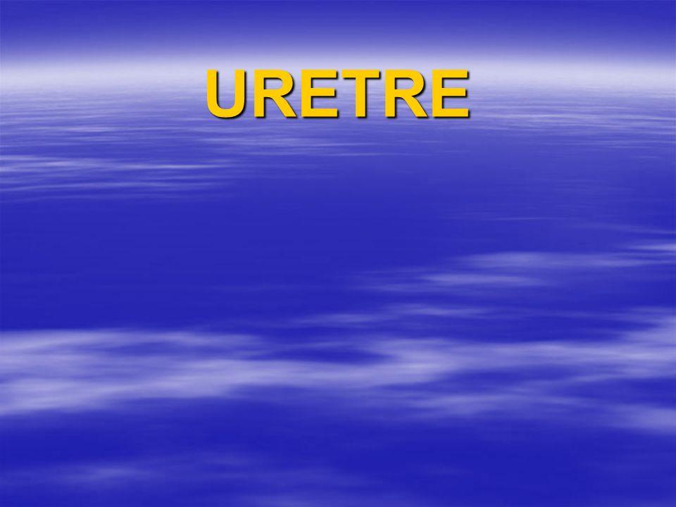 URETRE