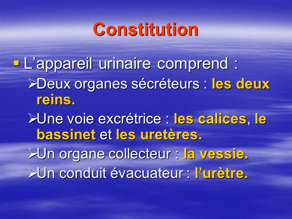 Constitution L'appareil urinaire comprend :