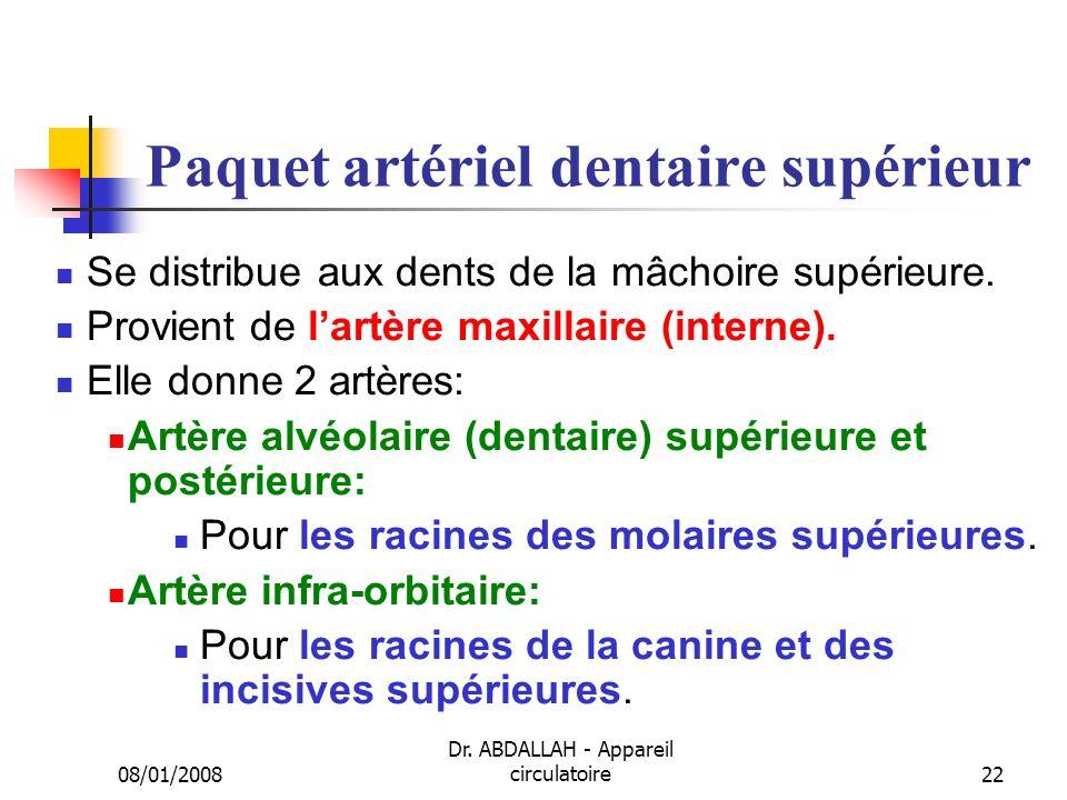 Paquet artériel dentaire supérieur