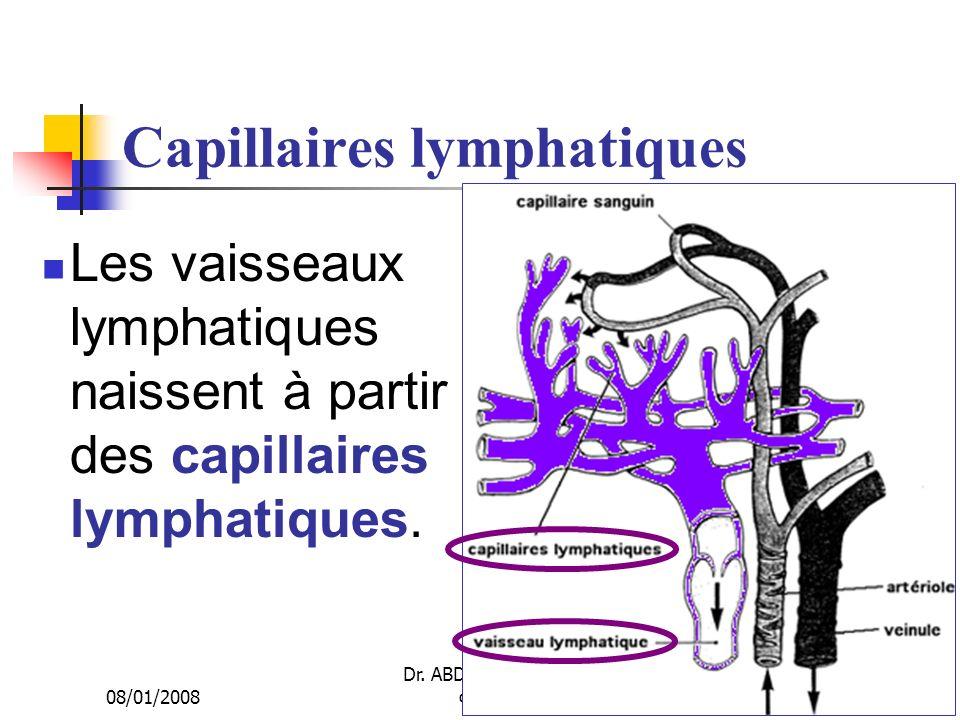 Capillaires lymphatiques