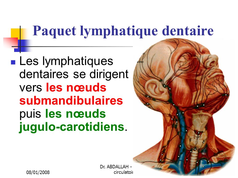 Paquet lymphatique dentaire