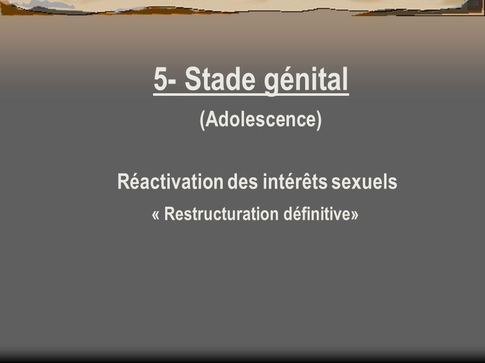 5- Stade génital (Adolescence) Réactivation des intérêts sexuels