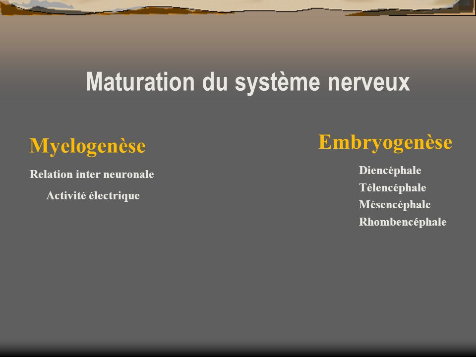 Relation inter neuronale