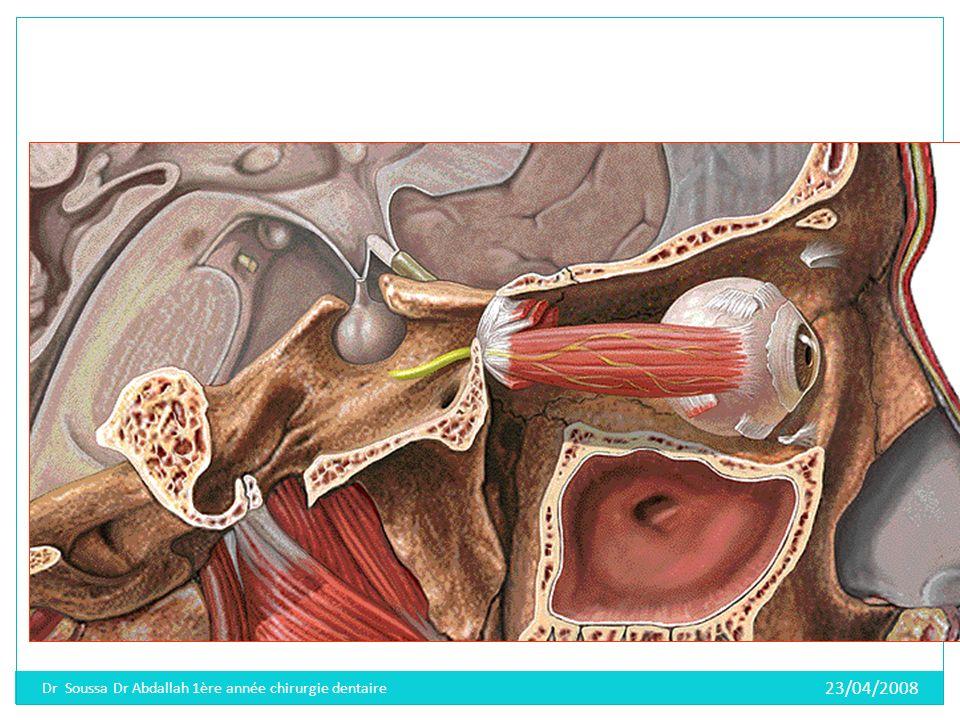 Dr Soussa Dr Abdallah 1ère année chirurgie dentaire