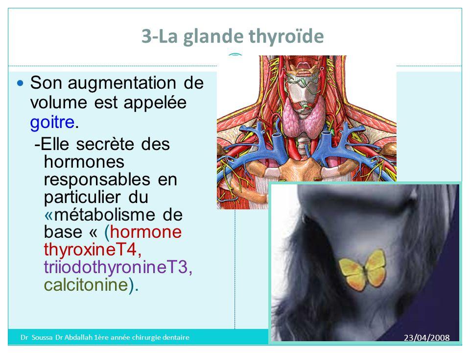 3-La glande thyroïde Son augmentation de volume est appelée goitre.