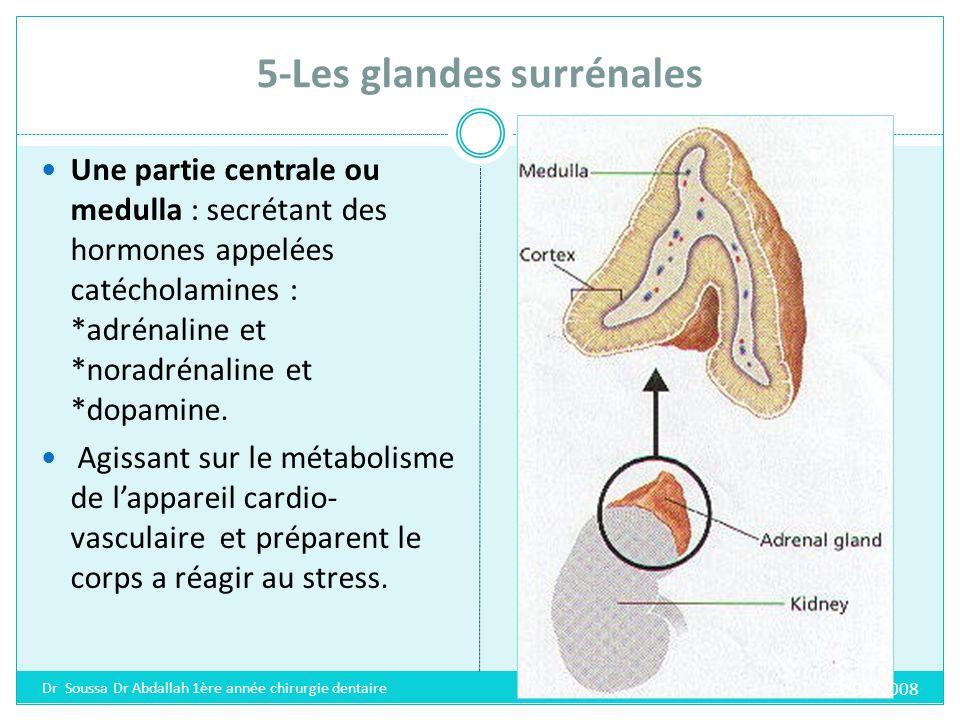 5-Les glandes surrénales