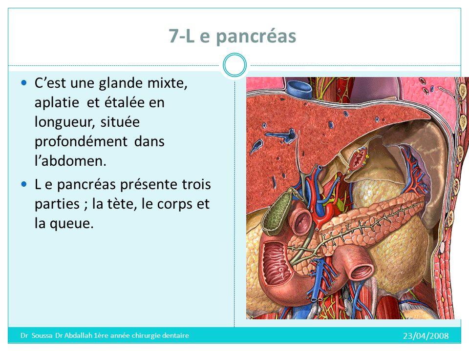 7-L e pancréas C'est une glande mixte, aplatie et étalée en longueur, située profondément dans l'abdomen.