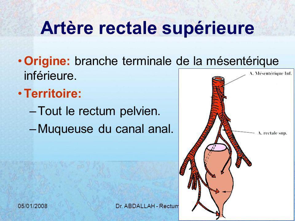 Artère rectale supérieure