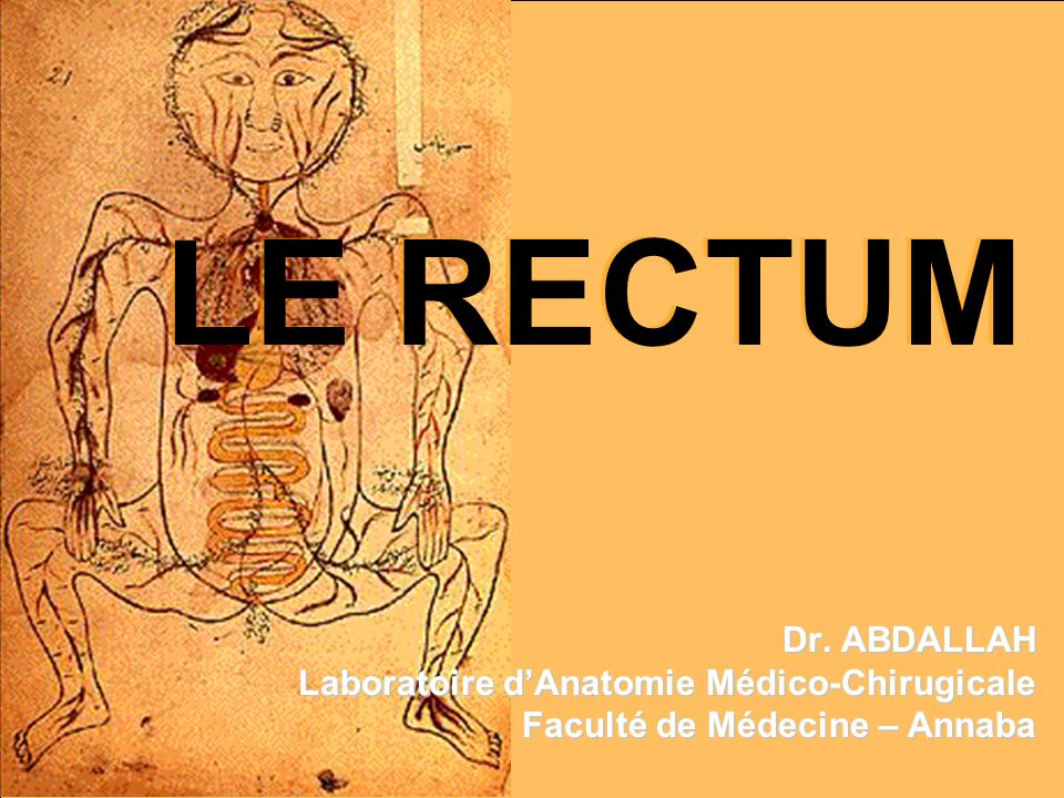 LE RECTUM Dr. ABDALLAH Laboratoire d'Anatomie Médico-Chirugicale