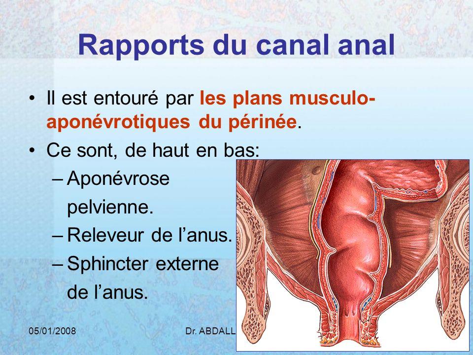 Rapports du canal anal Il est entouré par les plans musculo-aponévrotiques du périnée. Ce sont, de haut en bas:
