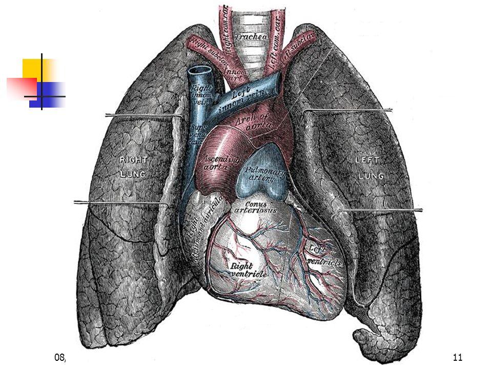 Dr. ABDALLAH - Appareil circulatoire