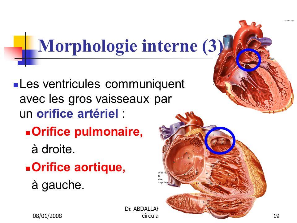 Morphologie interne (3)