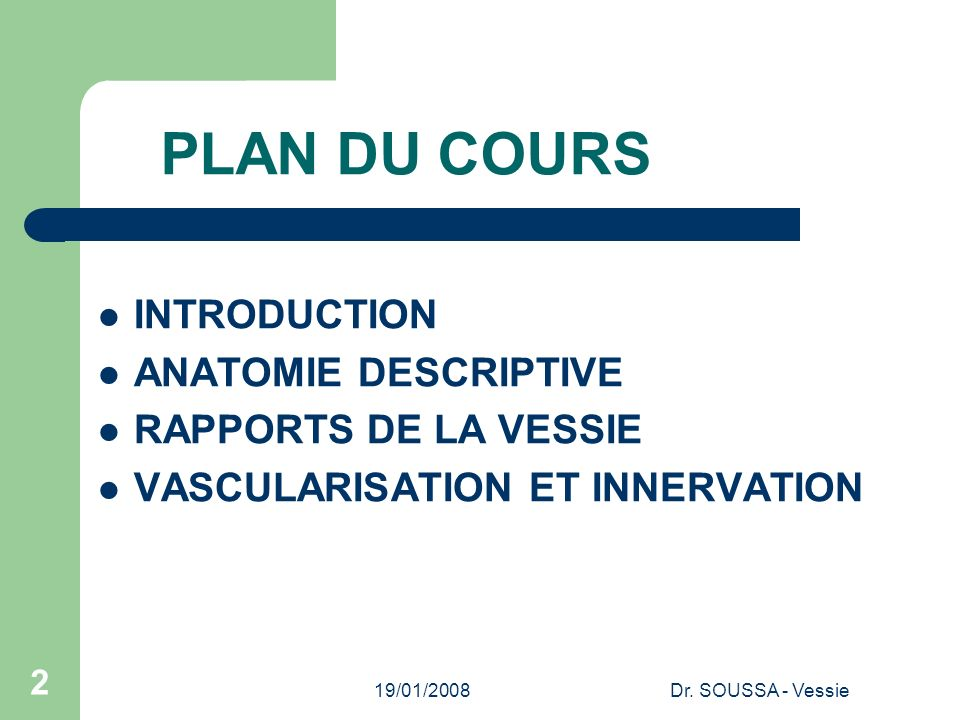 PLAN DU COURS INTRODUCTION ANATOMIE DESCRIPTIVE RAPPORTS DE LA VESSIE