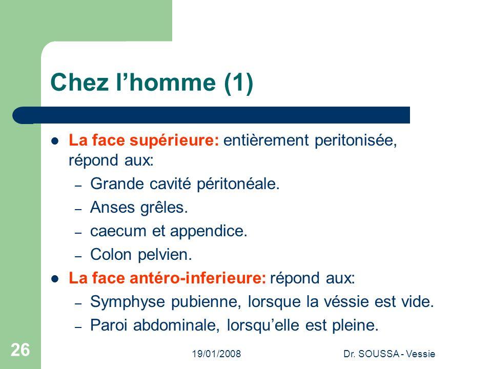 Chez l'homme (1) La face supérieure: entièrement peritonisée, répond aux: Grande cavité péritonéale.