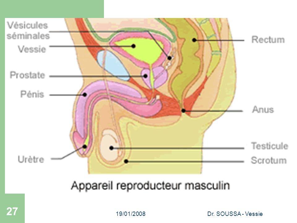 19/01/2008 Dr. SOUSSA - Vessie