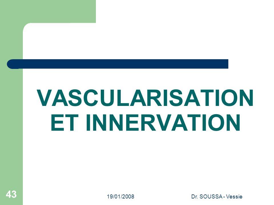VASCULARISATION ET INNERVATION