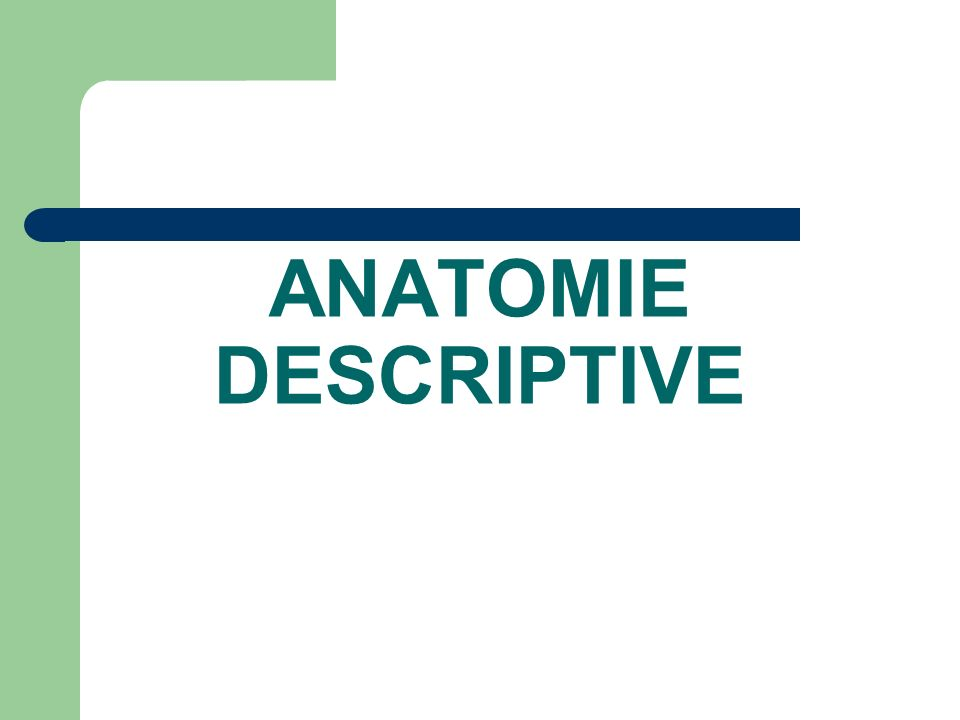 ANATOMIE DESCRIPTIVE