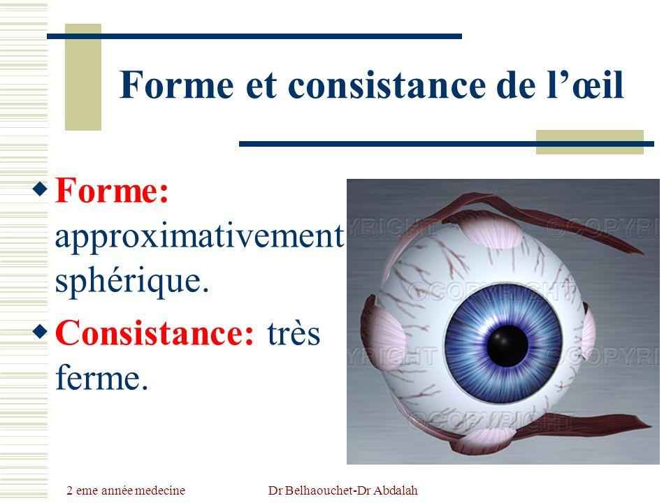 Forme et consistance de l'œil
