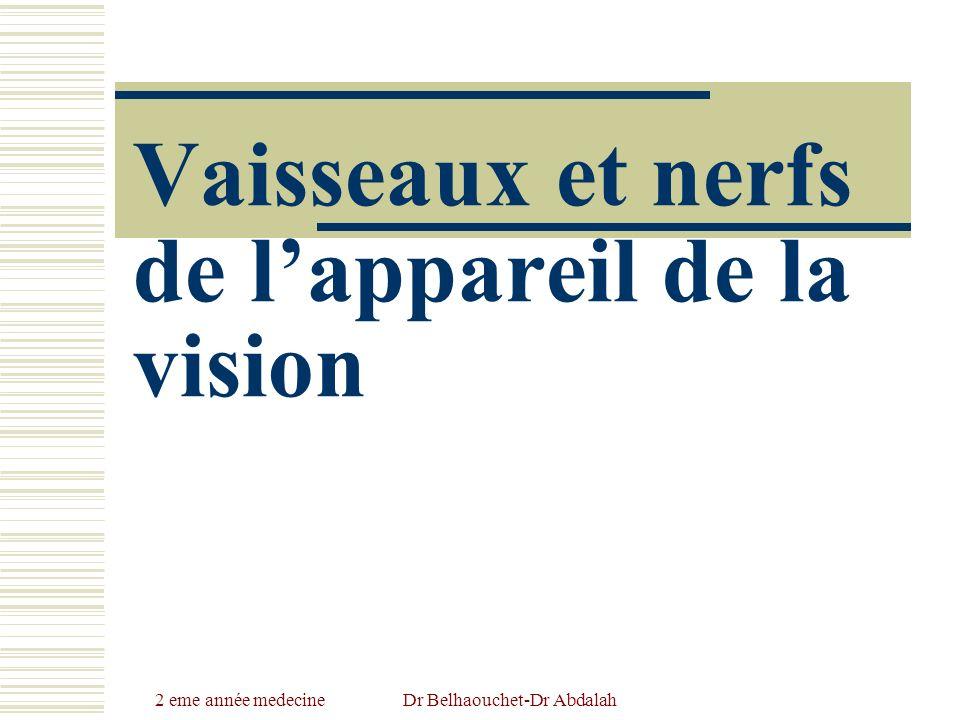 Vaisseaux et nerfs de l'appareil de la vision