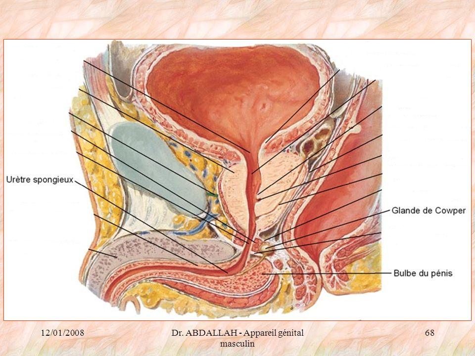 Dr. ABDALLAH - Appareil génital masculin