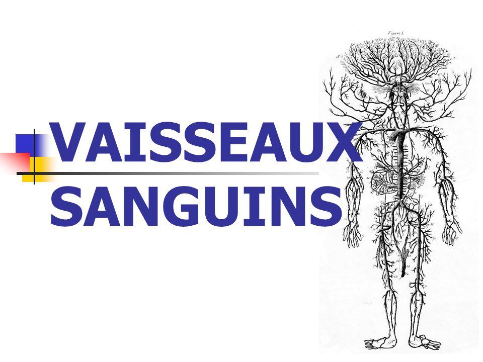VAISSEAUX SANGUINS
