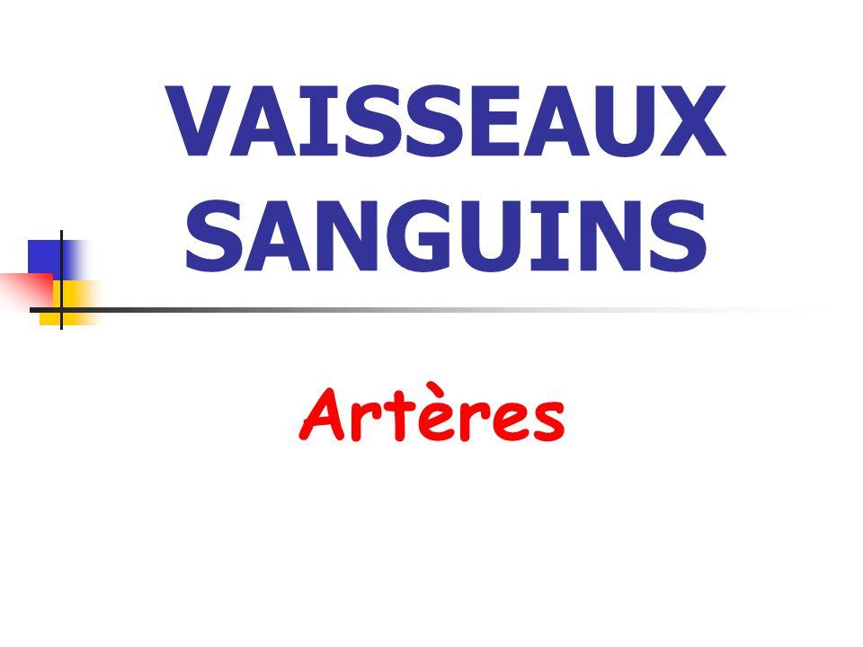 VAISSEAUX SANGUINS Artères